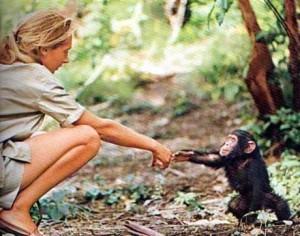 Jane Goodall y los simios